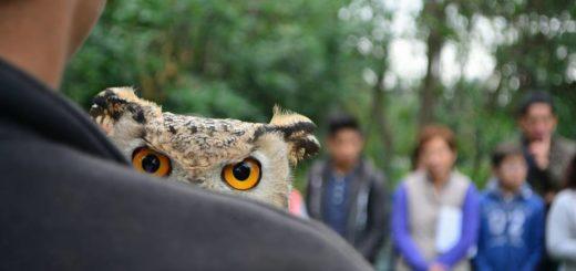 """Día Internacional de la Biodiversidad: """"La humanidad vive la sexta extinción masiva de especies provocada por el hombre"""""""