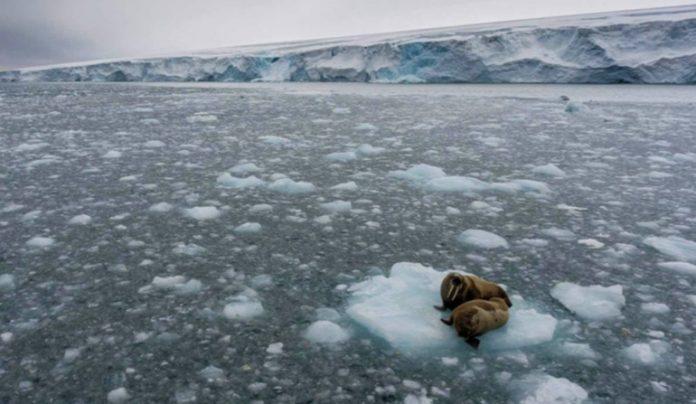 """Especialistas internacionales sostienen que el cambio climático es innegable y """"la decisión de EEUU, desacertada"""""""