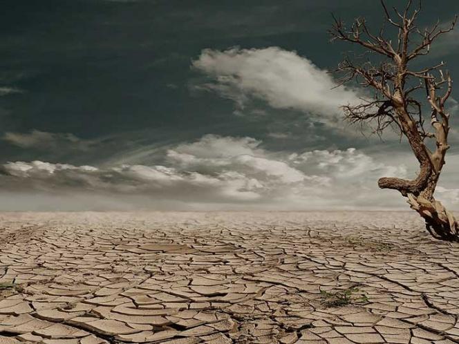 Combate a la desertificación y sequía, uno de los principales reto de la humanidad