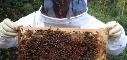 Todos los 21 de junio se celebra en Argentina el Día del apicultor
