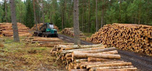 La imagen del sector forestoindustrial y su necesidad de diálogo empático con la comunidad