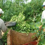 Productores afirman que el ministerio de Agroindustria de Nación pretende que los pequeños secaderos desaparezcan