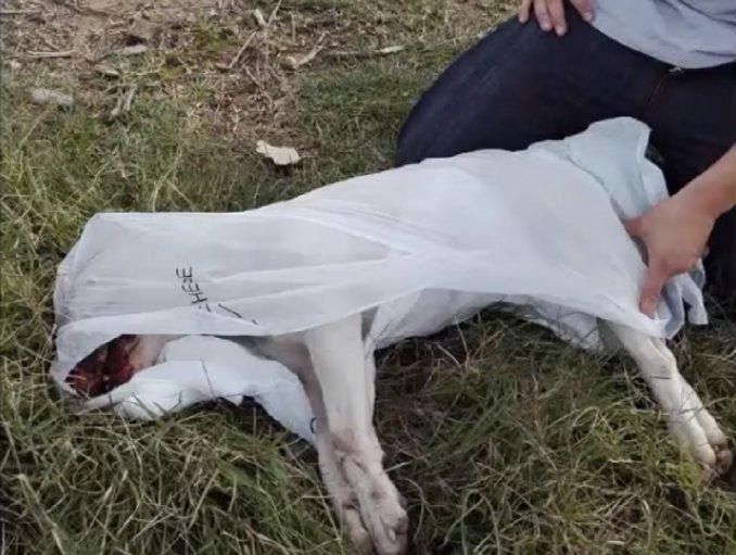 Por pertenecer a una «raza peligrosa» mataron a golpes a un bull terrier en Zárate
