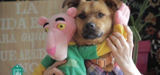 """""""Tu perrito"""", la nueva versión española de Despacito que promueve la adopción de canes"""