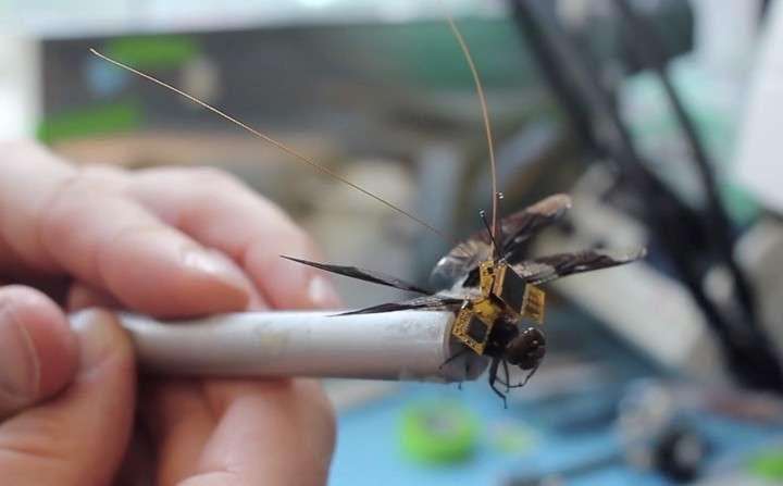 Enterate de como funciona el drone insecto más pequeño del mundo
