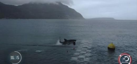 La carrera entre Michael Phelps y un tiburón blanco ya tiene un ganador