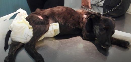 La conmovedora carta de Atila, el perrito rescatado que casi muere por las torturas recibidas