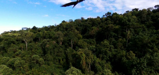 Andresito: La Bio-reserva Karadya integrará la red de reservas privadas de la Fundación Azara