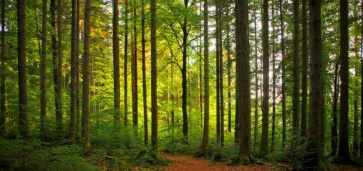 Destacan positivo intercambio de visiones sobre el manejo forestal FSC en Misiones