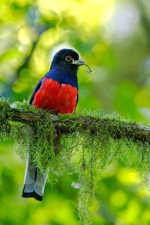 Selva Misionera: el Parque Provincial Urugua-í es reconocido a nivel mundial como un área de importancia para la conservación de las aves
