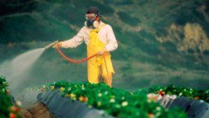 Según estudio de CONICET, 6 de cada 10 frutas y verduras están contaminadas en las verdulerías de Buenos Aires