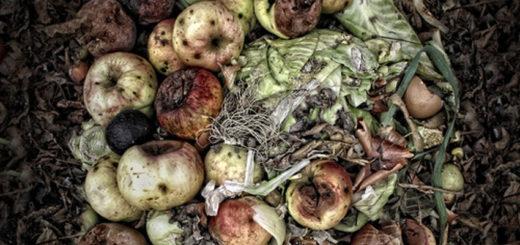 Un innovador concepto de biorrefinería transformará los residuos urbanos en nuevos productos biotecnológicos