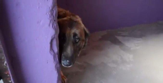 El video con el que todos lloran: las primeras caricias de su vida a un perro maltratado