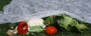 Ante la posible caída de heladas y nieve en la provincia recomiendan tapar la producción en las chacras