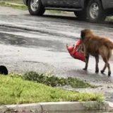 El Refugio de Animales, 250 perros y amor para muchos más