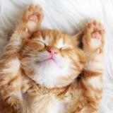 Posadas: un gato se adueñó de la vidriera en pleno centro, ama dormir sobre los zapatos y su historia se viraliza ¿Ya lo conocés?
