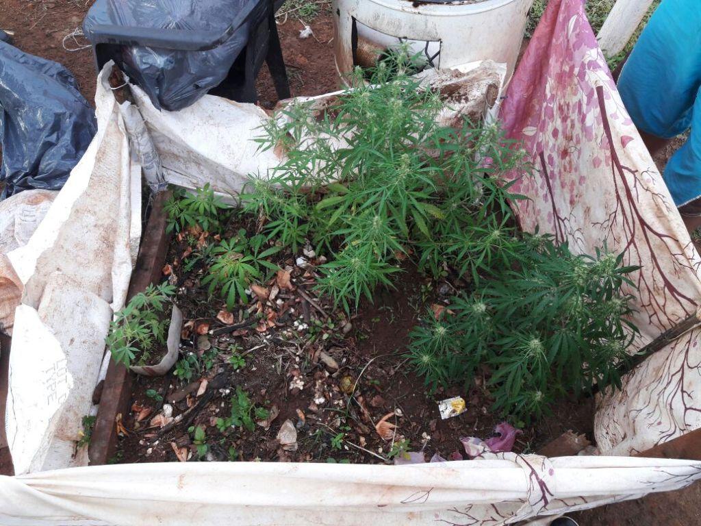 San Javier: decía ser «florista», pero en realidad se dedicaba al cultivo de marihuana para la venta