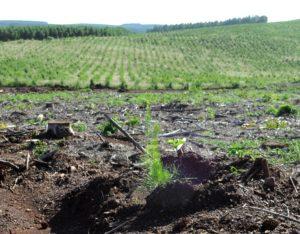 Coiform: Preocupa a los profesionales la demora en la aprobación de planes forestales y proyectos de uso del suelo