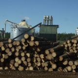 El desafío de los ingenieros forestales de ocupar un rol de liderazgo
