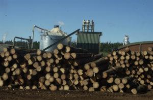 Chaco: Estrategias, tendencias y desafíos para los proyectos de bioenergía serán expuestos en las jornadas nacionales de Dendrocombustible y Dendroenergía