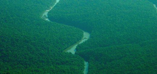 Forestal del alma: Despidieron con emotivos reconocimientos a la conservacionista Pamela Daphne de Colcombet
