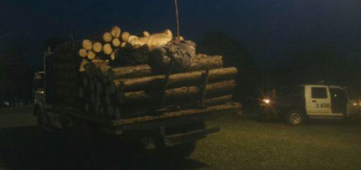 Evitaron una tragedia: sacaron de circulación un camión que llevaba pinos al tope y sin ninguna medida de seguridad