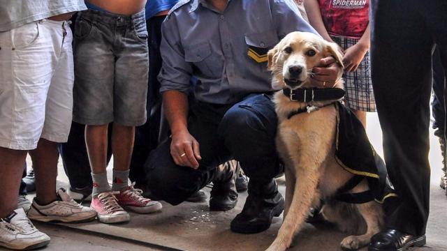 «Cartucho», el perro que hizo echar a un jefe de Policía en Corrientes