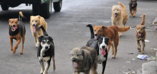 Proteccionistas denuncian una matanza masiva de perros en Chubut