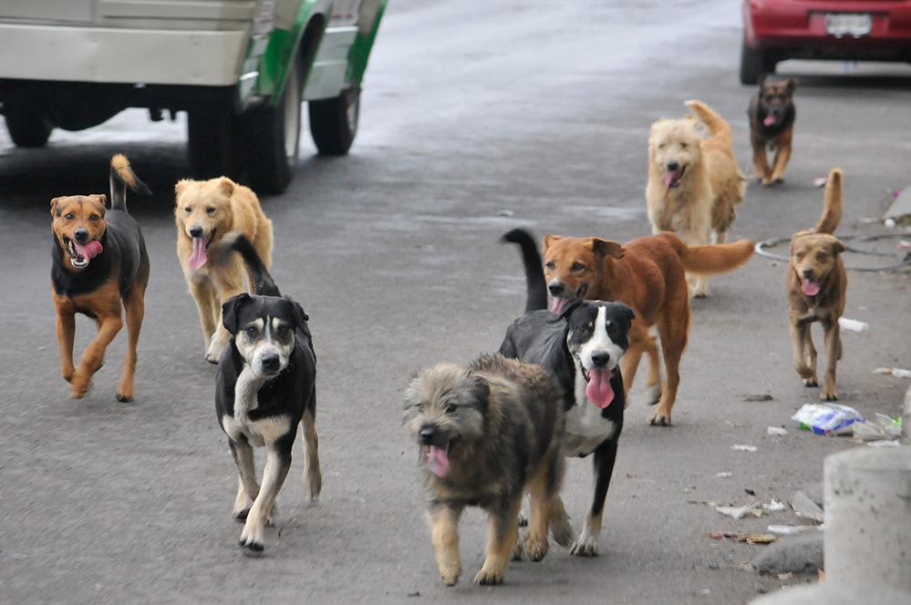 Advierten que se incrementan los casos de perros con Leishmaniasis en Oberá