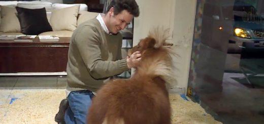 El dueño de la mueblería de Palermo justificó la exhibición del poni