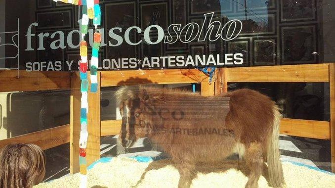 Por el Día del Niño, exhibieron un poni en una mueblería de Palermo