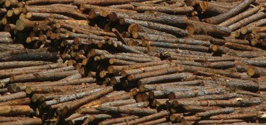 El precio de la madera triturable y su relación con el bienestar social