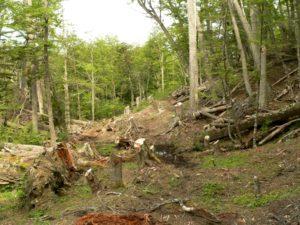 Justicia ratificó condena ejemplificadora por tala ilegal en un parque nacional en Tierra del Fuego