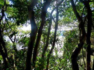 Nuevamente, la Nación recorta fondos y destinaría a la Ley de Bosques Nativos apenas 556 millones de pesos