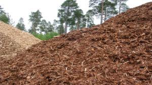 La firma santafesina Molino Matilde SA invertirá en una planta generación de energía de biomasa forestal en el Sur de Misiones