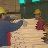 Coronavirus: Misiones habilitará la reactivación progresiva de rubros de la forestoindustria
