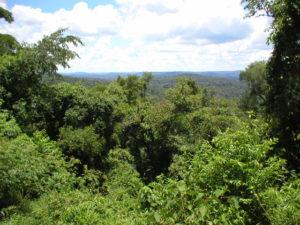 Para el Presupuesto Nacional 2020 contemplan en el proyecto apenas el 3,25% de lo que correspondería a Misiones según la Ley de Bosques Nativos