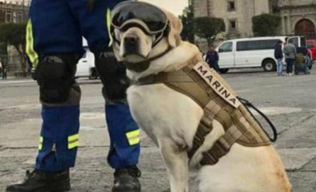 La verdadera Frida: la perra rescatista que conmovió al mundo tras el terremoto en México