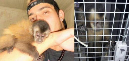 Salta: rescató a un mono de un incendio hace tres años, se lo sacaron y ahora lucha para recuperarlo
