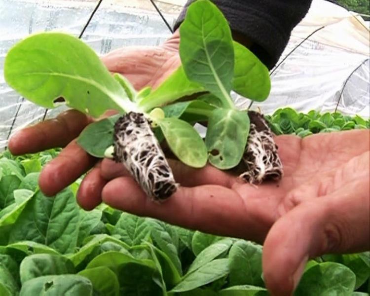 La Planta de Sustrato de San Vicente tendrá su laboratorio propio
