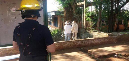 Un enjambre de peligrosas abejas motivó la suspensión de clases en una escuela de Iguazú