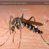 Comenzó una nueva edición del Levantamiento de Índices Rápidos de Aedes aegypti (LIRAa) en Posadas