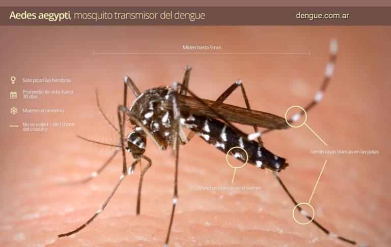 En lo que va del año Paraguay registra 2.397 casos de dengue