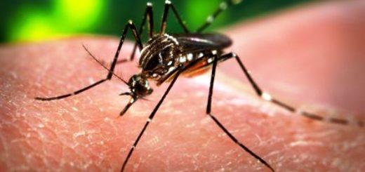 Confirmaron seis casos de dengue en El Soberbio