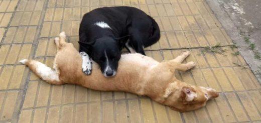 Un perrito callejero custodió toda la noche a otra perra que murió atropellada