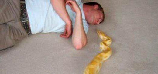 La misteriosa muerte de un domador de serpientes tras la huida de una de sus mascotas