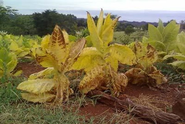 La sequía preocupa en la región norte de la Provincia