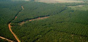 CEOs del Cono Sur darán a conocer las claves para el negocio y la inversión forestal en la región