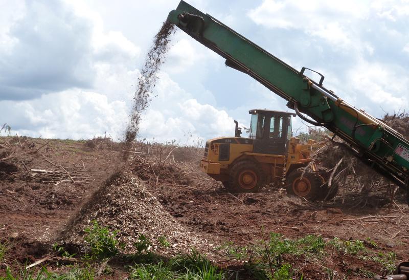 Estudian proyecto de creación de un complejo foresto-industrial de alta competitividad en Zona Franca Industrial en Posadas