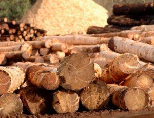 El norte de Misiones recibe a Macri con fuertes expectativas ante la sobreoferta de madera y la falta de un proyecto industrial de envergadura en la región